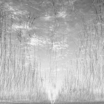 Acedia by Daniel Menche