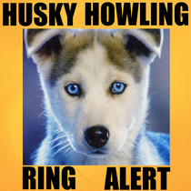 Husky Howling Ring Alert by Super Crazy Ring Ring Tones