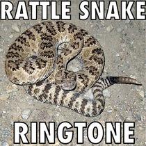 Rattle Snake Ringtone by The Snake