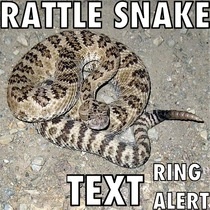 Rattle Snake Text Ring Alert by The Snake