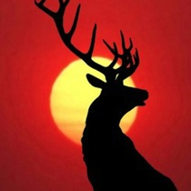 Bull Elk by Bull Elk Ringtone