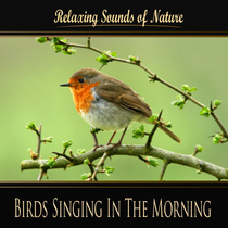 Birds Singing In The Morning (Nature Sounds) by Sounds of Nature