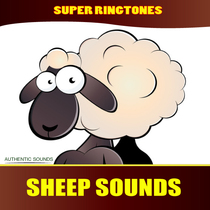 Sheep Sounds (Farm Animals, Nature Sounds) by Super Ringtones