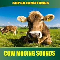 Cow Mooing Sounds (Farm Animals, Nature Sounds) by Super Ringtones