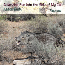 A Javelina Ran Into the Side of My Car by Allison Boley