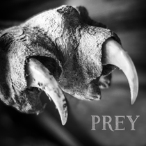 Prey by Beast