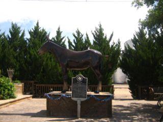 Muleshoe TX