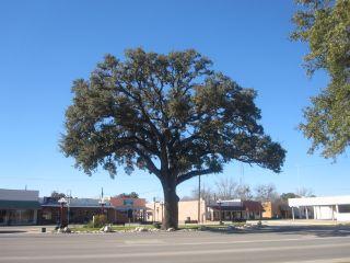 Pleasanton TX