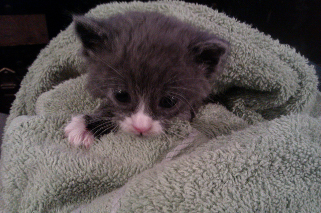 3 week old kitten