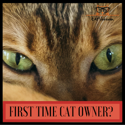 Are You A First Time Cat Owner?