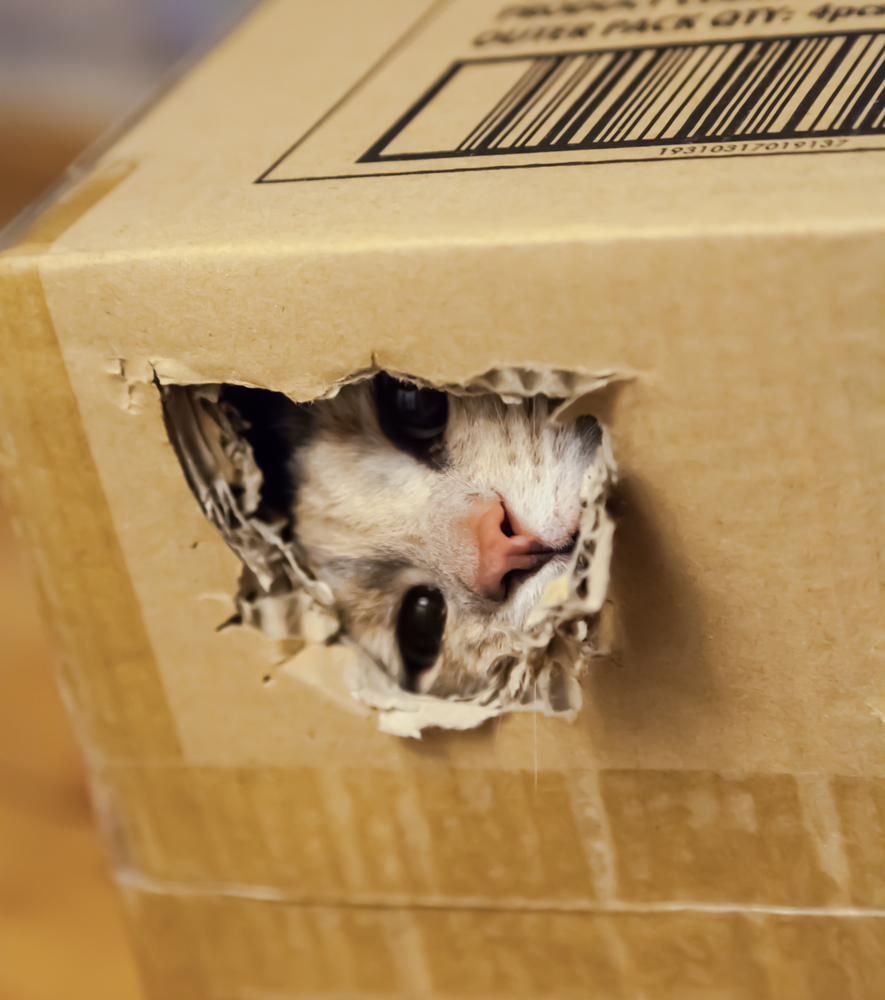 Cat looking through hole in cardboard box