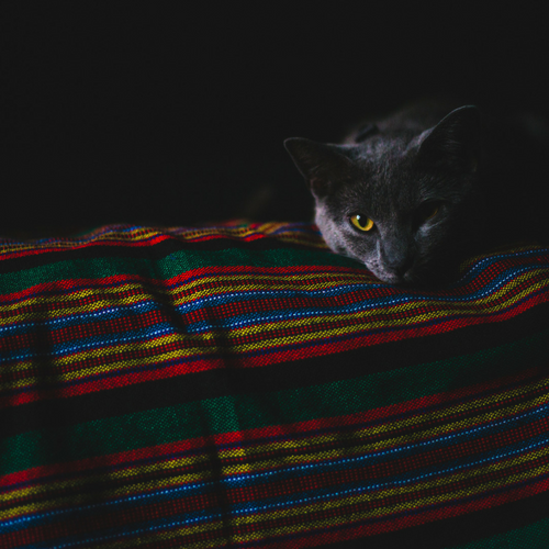 cat resting in the darkness
