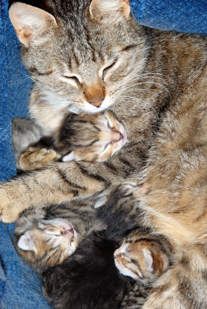 Momma Cat With Newborn Kittens