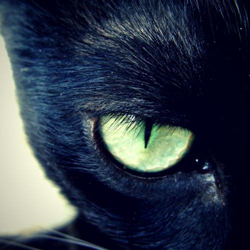 My Black Cat's Eye