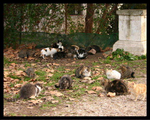 Stray Cats Gathering