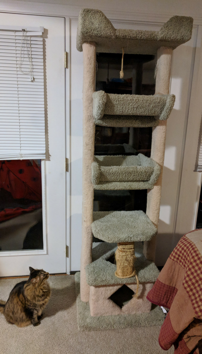 The 10 Year Old Cat Tree And Tanta Queen