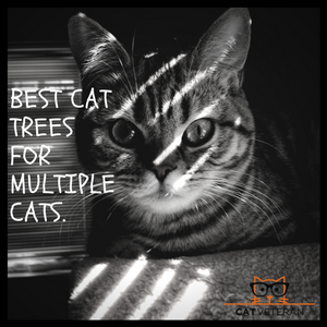Best Cat Trees For Multiple Cats