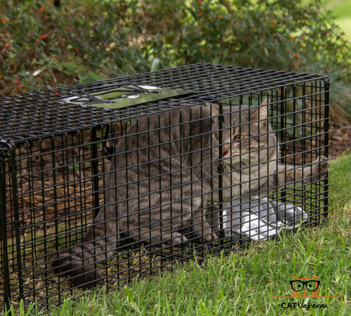 Trapping A Feral Cat For Neutering