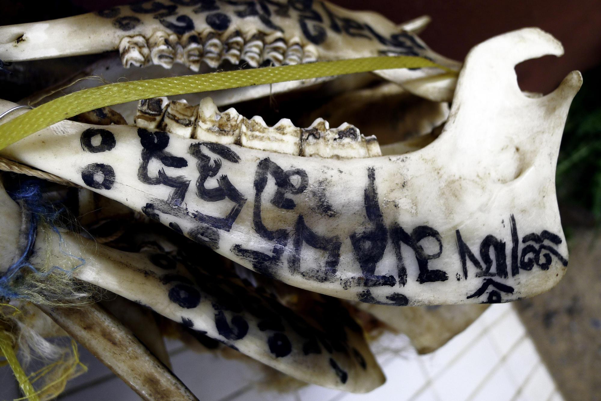 Image of Painted Bones