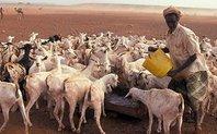 Index_africa_goats_large