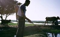 Index_irrigation_egypt2_large