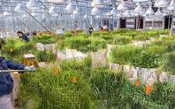 Index_greenhouse_grasses_berkeley_lab_large