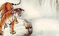 Index_tiger_in_the_wild_large