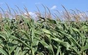 Aside_gm_crop_1801_large