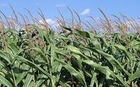 Index_gm_crop_1801_large