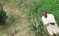 Index_ethiopia_land_grab_farming_3004_large