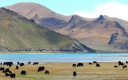 Aside_tibet_grassland_desertification_large