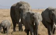 Aside_elephant1