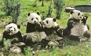 Aside_panda