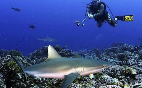 观鲨旅游收益超过捕鲨业