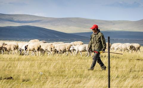 中国应从传统农业转型为草地农业