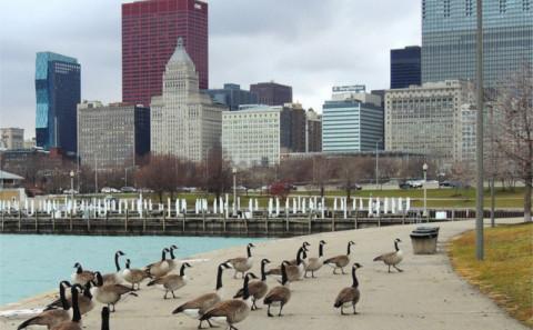 发现城市中的自然