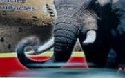 Aside_elephant_poster