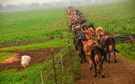 Index_organic_cattle_in_ohio