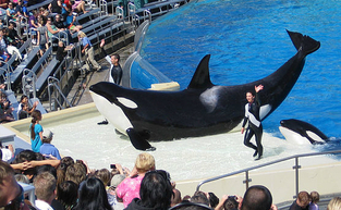 Sidebar_640px-orcas_at_seaworld_show_meitu_1