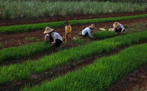 Losing Arable Land, China Faces Stark Choice: Adapt or Go ...  |China Farmland