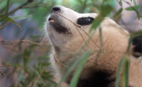 英国摄影师镜头下的中国环境危机