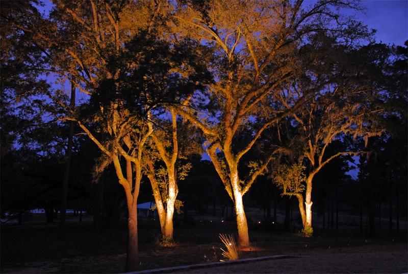 Progettare giardini e terrazze come illuminare gli alberi teknoring