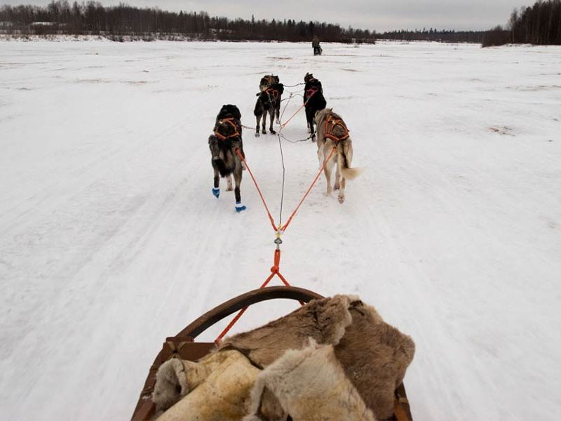 Who Needs Reindeer? 3 Real-Life Sled Dogs
