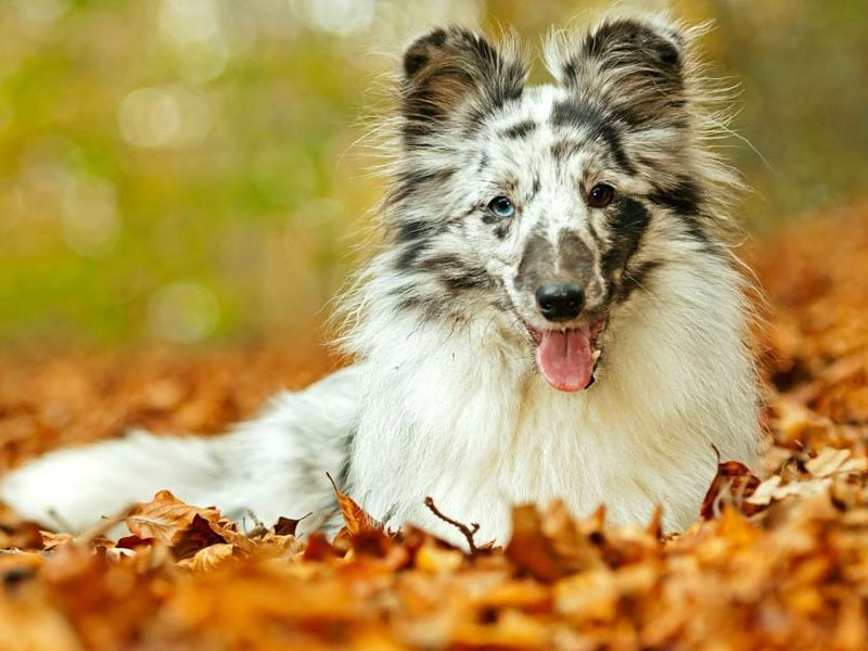 Quick Ways to Get Your Dog's Coat Ready for the Fall