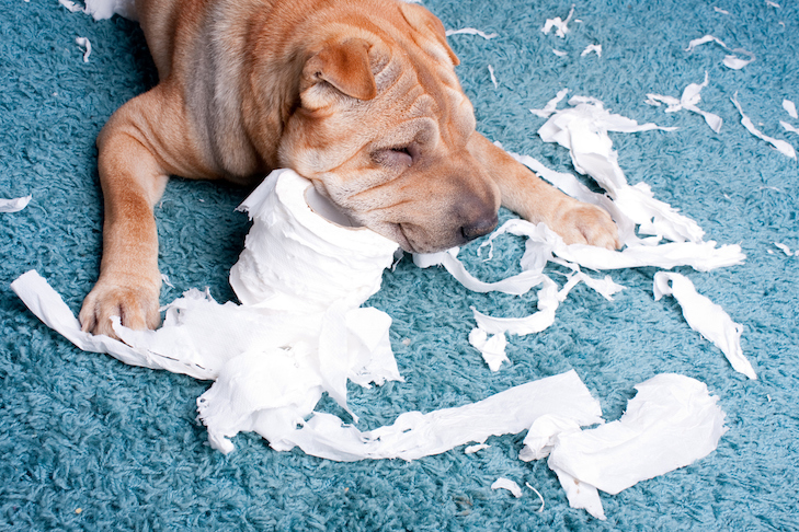 My Dog Ate Tissue: What Do I Do?