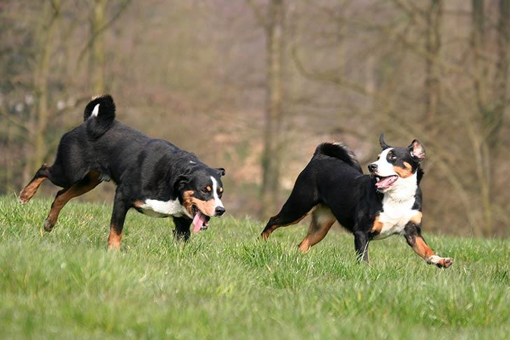 Почему собаки лают друг на друга?