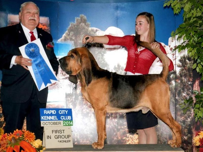 """Practicing Your """"Ta-Da"""": Tips from a Young Dog Show Exhibitor"""