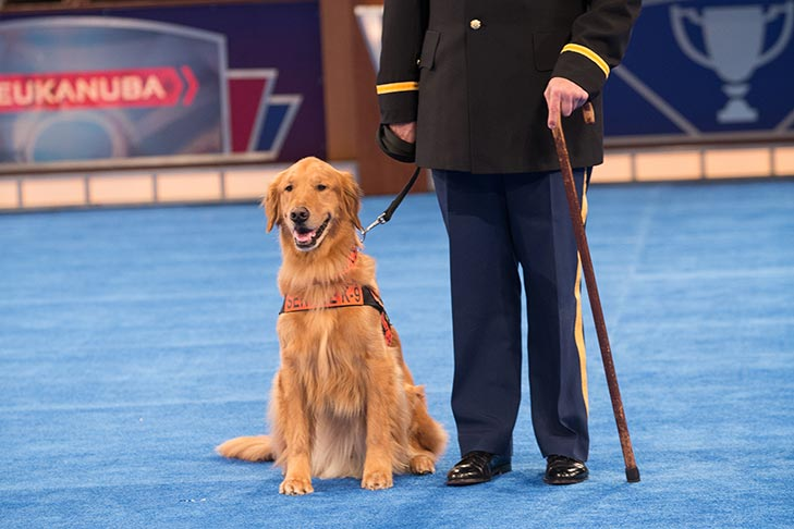 "Service Dog: ""Tuesday,"" a Golden Retriever owned by Capt. Luis Carlos Montalván."