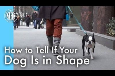 How to Tell if Your Dog is in Shape video still