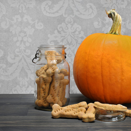 plain canned pumpkin for dogs
